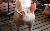 Our Pork Partnerships